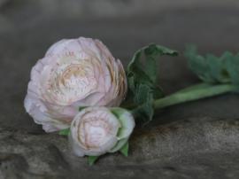 Fleur Ranunkel H40 cm creme , hemmetshjarta.se
