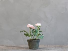 Fleur Ranunkel i gl. keramikkruka H16 cm rosa , hemmetshjarta.se