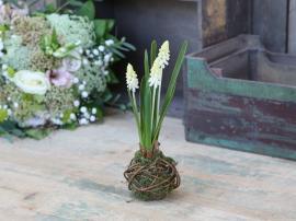 Fleur Pärlhyacintlök H25 cm vit , hemmetshjarta.se