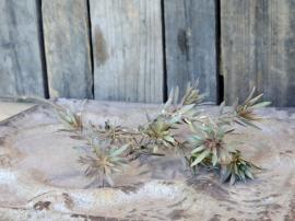 Fleur Gren med blad H72 cm grönt , hemmetshjarta.se