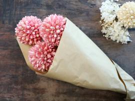 Fleur Äkta Torkade Snöboll blomma 3 st ca. L60 cm rosa i brunt papper , hemmetshjarta.se