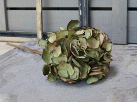 Fleur Hortensia H46 cm grön , hemmetshjarta.se