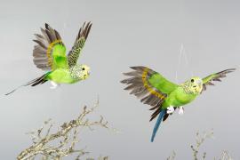 Undulat Flygande Grön 20x25x10cm 2-pack , hemmetshjarta.se