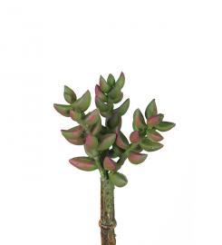 Konstgjord Succulent 10 cm * , hemmetshjarta.se