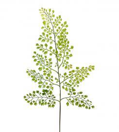 Konstgjord Adiantum blad 60 cm , hemmetshjarta.se