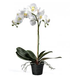 Konstgjord Phalaenopsis 60 cm , hemmetshjarta.se