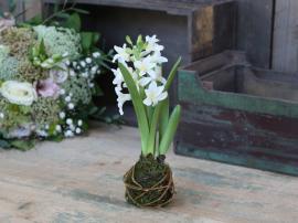 Fleur Hyacinth groddlök H24 cm vit , hemmetshjarta.se
