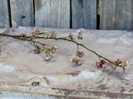 Fleur Gren med frökapslar H84 cm , hemmetshjarta.se