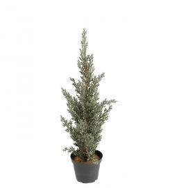 Konstgjord Cypress 40 cm , hemmetshjarta.se