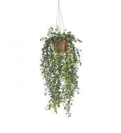 Konstgjord Cucullata 60 cm , hemmetshjarta.se