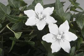Blom/Stick Lilja Vit 4cm 2-pack , hemmetshjarta.se