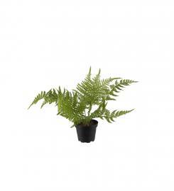 Konstgjord Asparagus 25 cm , hemmetshjarta.se