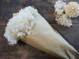 Fleur Äkta Torkad Hortensia blomma 1 st L60 cm creme i brunt papper , hemmetshjarta.se
