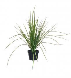 Konstgjord Gräs 40 cm , hemmetshjarta.se