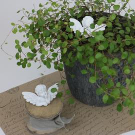 Ängel på pinne 2- pack - vit , hemmetshjarta.se