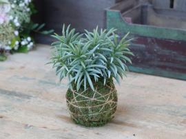 Fleur Plant med moss boll H18 cm grön , hemmetshjarta.se