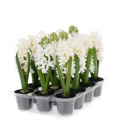 Konstgjord Hyacint mix 23 cm 3-pack , hemmetshjarta.se