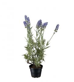 Konstgjord Lavendel 45 cm , hemmetshjarta.se