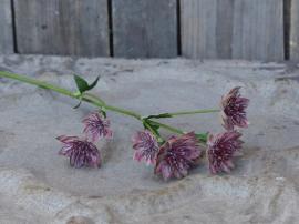 Fleur Tistel H56 cm , hemmetshjarta.se