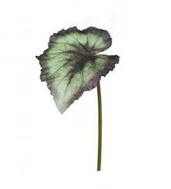 Konstgjord Rexbegonia blad 20 cm , hemmetshjarta.se