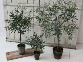 Vecka 46 Fleur Olivträd i gl. keramikkruka H98 cm grön , hemmetshjarta.se