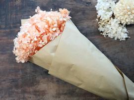 Fleur Äkta Torkad Hortensia blomma 1 st L60 cm ljus korall i brunt papper , hemmetshjarta.se
